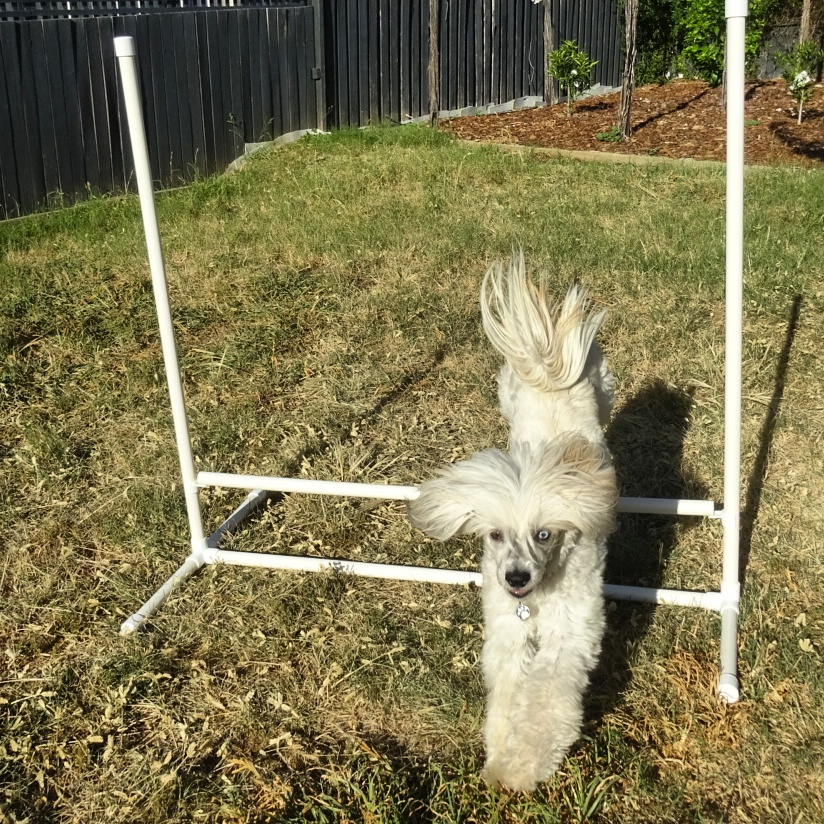 PVC dog agility jump from Klever Cages